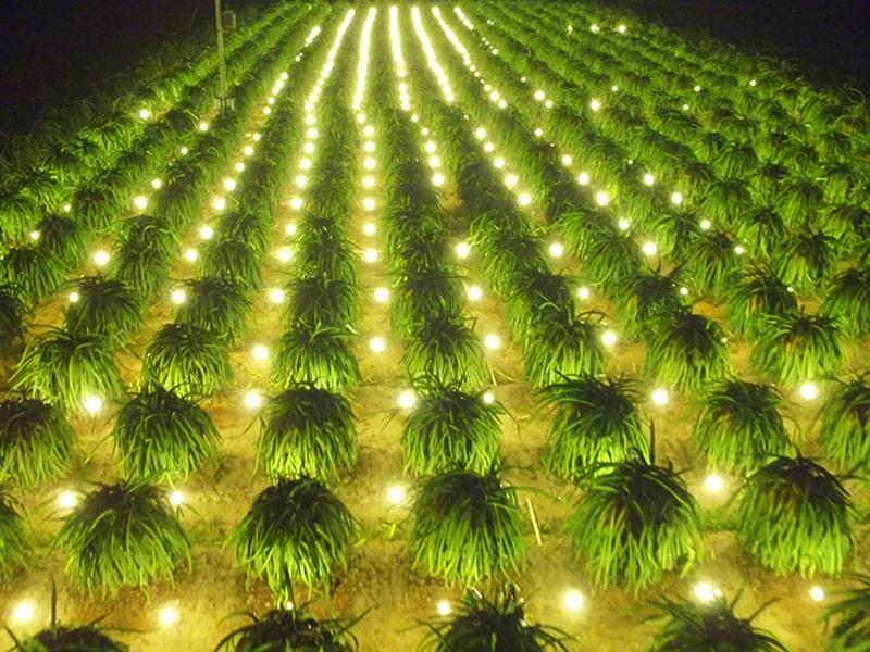 đèn led chiếu sáng trong ngành nông nghiệp